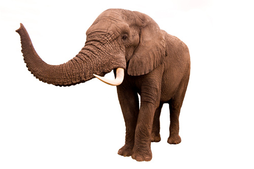 Seeing the elephant – in your business
